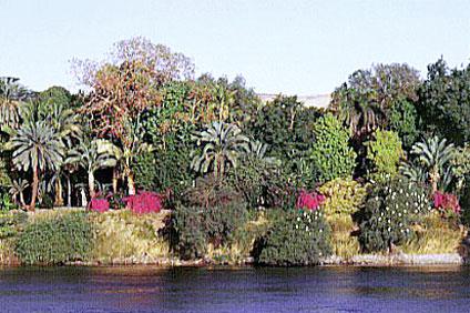 جزيرة النباتات في أسوان