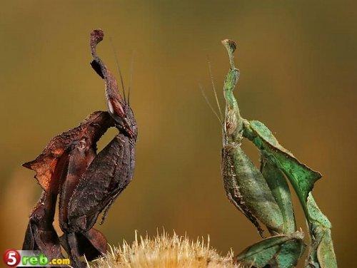 الحشرات