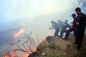 الحرائق الجزائر..