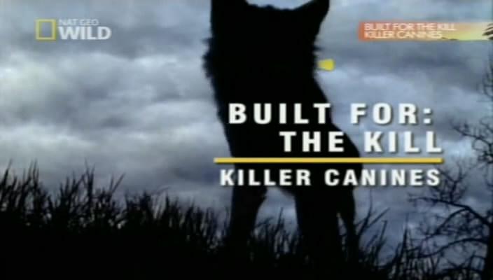 حصريا مملكة الغابة ليقتل الانياب القاتلة بحجم ميجا سيرفرات سريعه ومباشرة
