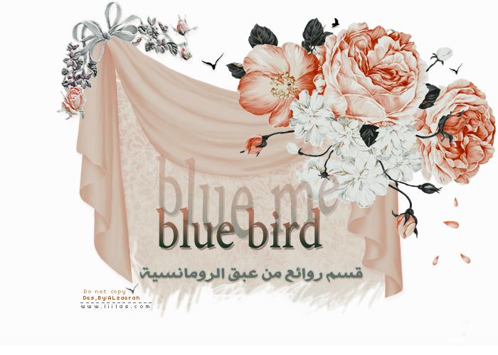 blue berd الرومانسية