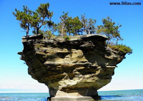أغرب جزيرة في العالم Liilas_13532082402
